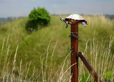 fence post. Turtle On A Fence Post